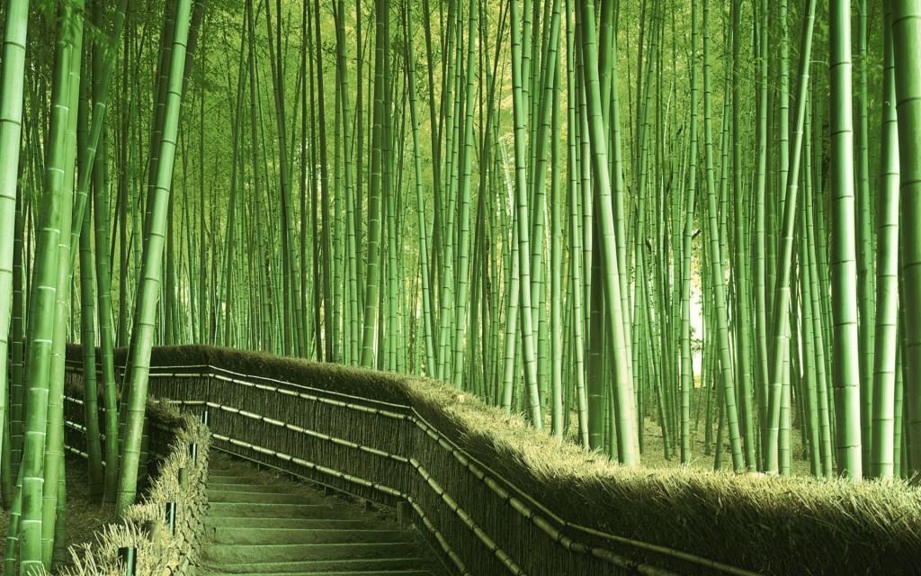 Bambu, Material Alternatif yang Ramah Lingkungan