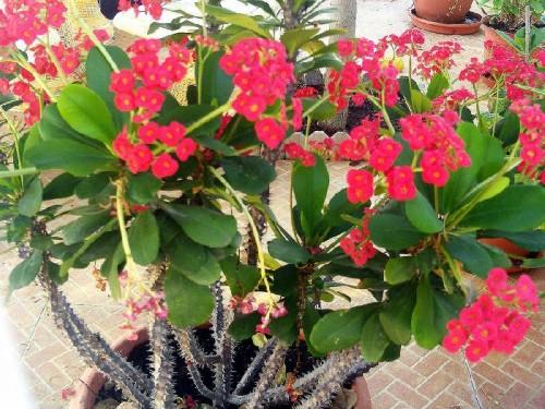 floweriancom